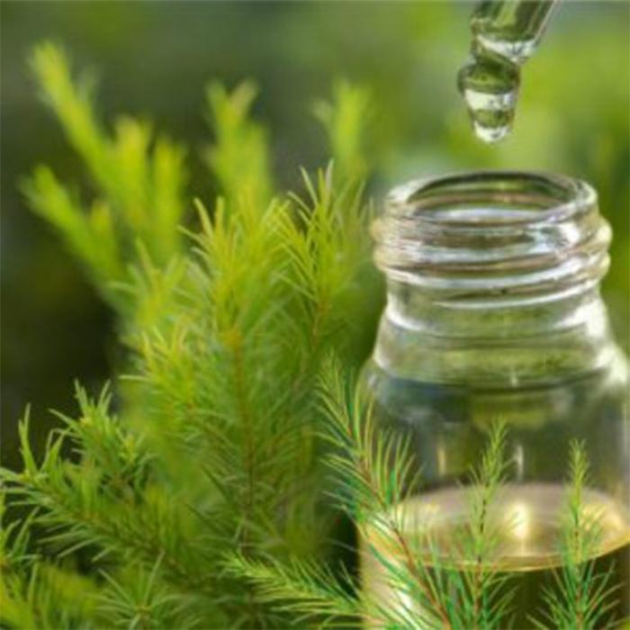 Tinh dầu tràm trà chính là kẻ thù của những nốt mụn mọc ở cằm